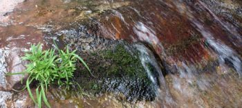Spring flowing over rocks, with moss and plants | Sinjin Eberle