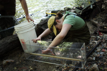 Measuring American Eeel | Jessie Thomas Blate