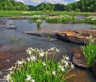 Flint River | Alan Cressler