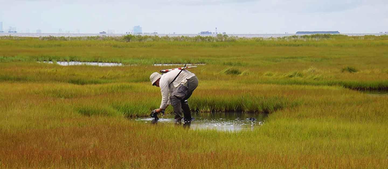 Partnership for the Delaware Estuary