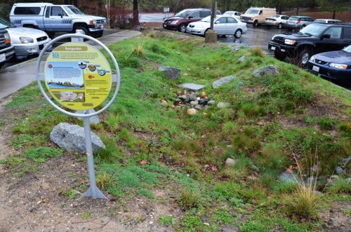 This raingarden catches stormwater from a large parking lot in Nevada City CA and sinks it into the ground | Jacob Dyste