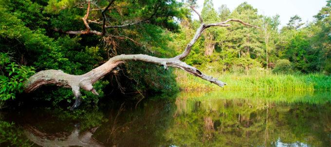 The Ashley River Blue Trail
