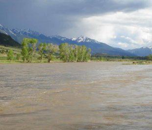 Yellowstone River | Scott Bosse