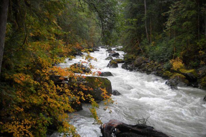 Nooksack River in Autumn | Jenr [Flickr]