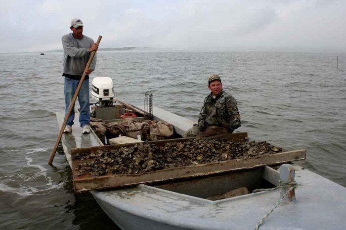 Apalachicola Bay osteren | Stan Kirkland Florida FWC