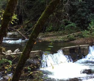 Citico Creek Dam | Gerrit Jobsis