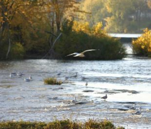 Maumee River   Jason [FlickrCC]