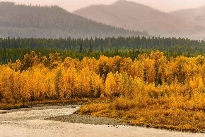 NF Flathead River [MT] | JD Hascup