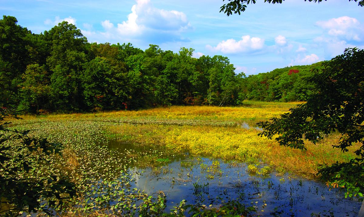 The Potomac River at Mason Neck National Wildlife Refuge   Bill Wallen/USFWS