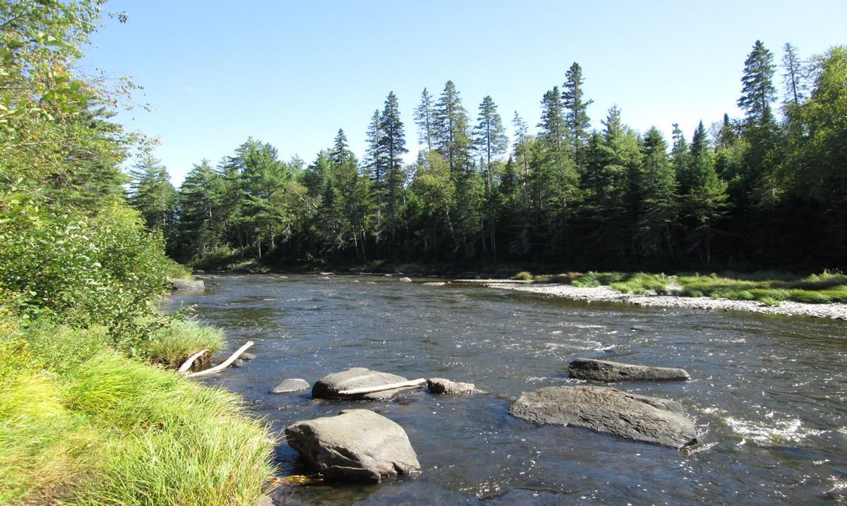 The Penobscot River   Mark Plummer