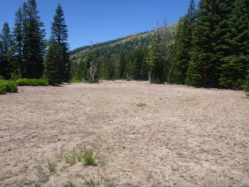 A large, barren patch of a meadow made us wonder what had happened here.   Bonnie Ricord
