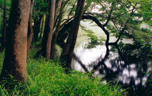 Congaree National Park | Ron Ahle