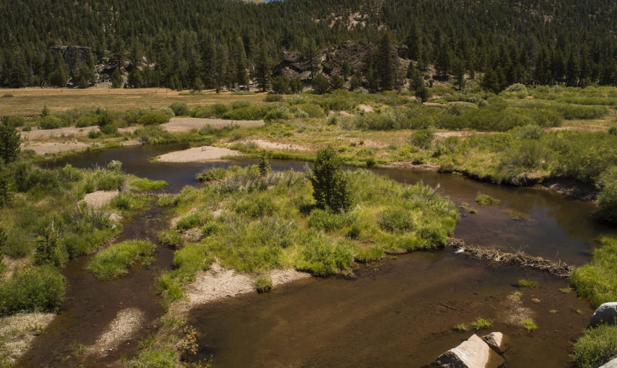 Active beaver dams just upstream of the upper restoration area.   Daniel Nylen