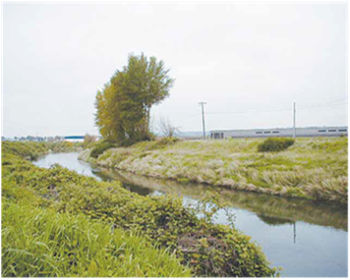 The middle and lower sections of the Green-Duwamish River need more shade. Development has led to few trees on riverbanks and increased water temperatures.   Washington Department of Ecology