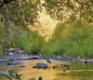 Verde River, AZ | Arizona Office of Tourism