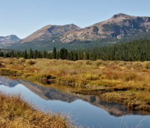 Scenic Hope Valley Meadow | Judy Wickwire