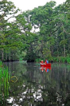 Canoeing the Pascagoula River.   Visit Mississippi