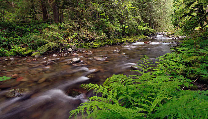 Oregon's Sandy River, which includes two federally designated Wild and Scenic River segments. | Bureau of Land Management
