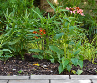 Back yard rain garden and permeable pavers. | Center for Neighborhood Technology