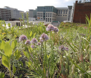 Green roof at American Society of Landscape Architects.   ASLA