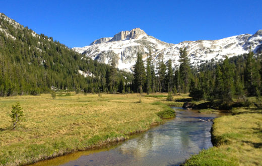 Healthy meadows act as natural reservoirs, California.   Jacob Dyste
