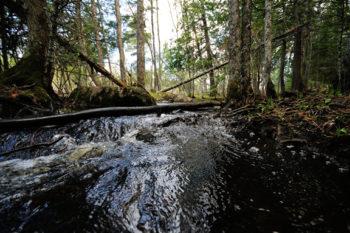 Boundary Waters, MN | Joe Brandmeier