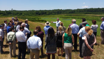 Water treatment wetlands at Clayton County Water Authority, Headwaters of the Flint River. | Jeremy Diner