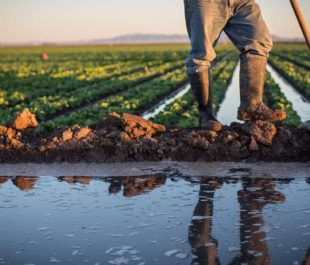 Farm worker | Amy Martin