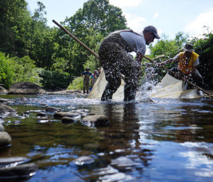 U.S. Fish and Wildlife scientists run a seine through a remnant pool to catch fish at a decrepit dam on the Cane River, in North Carolina.   Photo: U.S. Fish and Wildlife Service Southeast Region