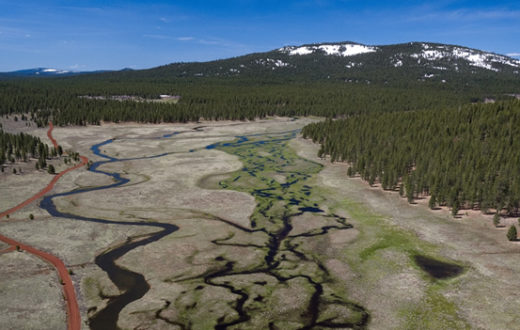 Confluence Meadow.   Photo: Trout Unlimited/Drone Productions