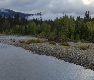 A healthy, connected floodplain on the Cooper River in the Central Cascades of WA   Photo: Jonathon Loos