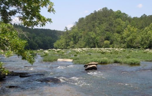 Cahaba River, Alabama | Photo: g - s - h (Flickr)