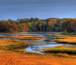 Fall over the salt march in West Falmouth, MA.   Photo: slack12 (Flickr)