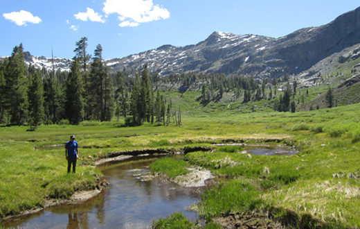 Forestdale Meadow in the Upper Carson watershed.