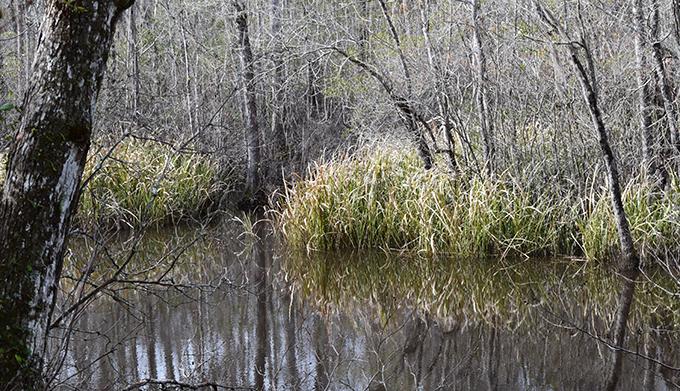 Choppee Creek | Emma Boyer