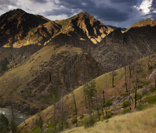Middle Fork of the Salmon river, one of the original 8 Wild and Scenic Rivers. Runs north from near Stanley to near Salmon,Idaho. Drops 3000 feet in the 100 miles it runs. Looking north along trail to Johnson Pt.   Michael Melford