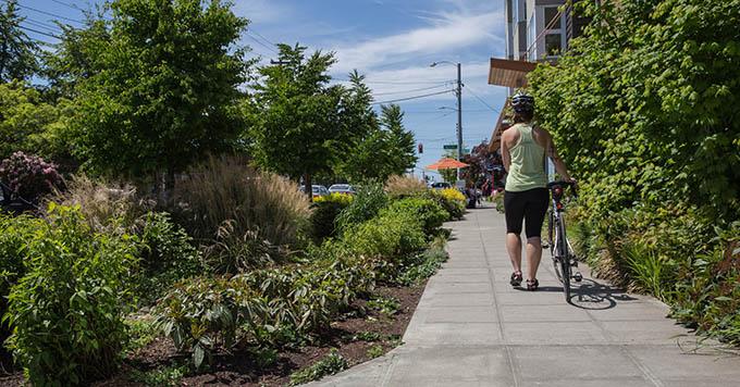Rain gardens run along the sidewalk.   Marcela Gara, Resource Media