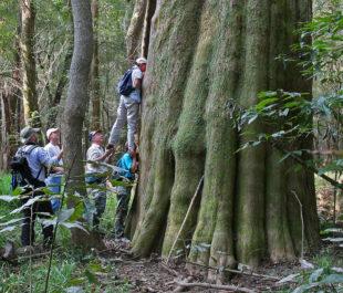 Congaree National Park Cypress, Joe Kegley