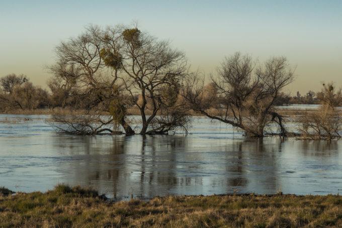 San Joaquin, Grasslands State Park | Photo by Daniel Nylen