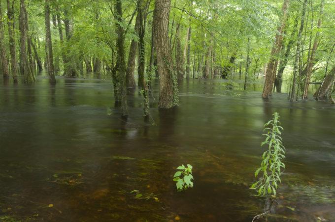 Kill Kare NE fork, Edisto River   Photo by Larry Price