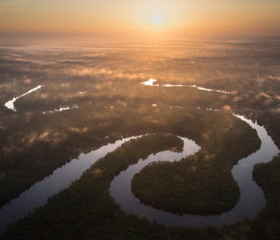 Waccamaw River   Photo by Mac Stone