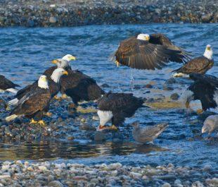 Nooksack River, WA   Photo by Chuck Hilliard