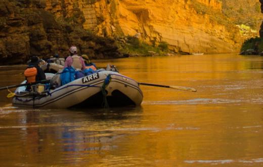 Canyon Gold | Photo: Ken Neubecker