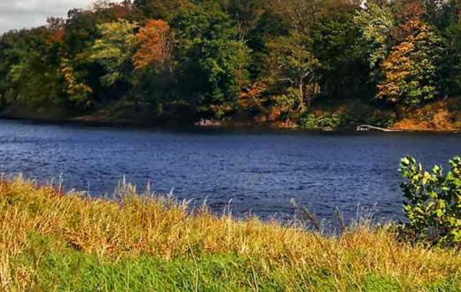 Delaware River Floodplain | Photo by Nicholas Tonelli