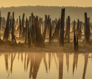 Ocklawaha River, FL | Photo by Doug Eng