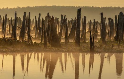 Ocklawaha River, FL   Photo by Doug Eng