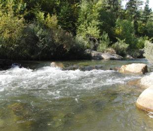 Rapid Creek | photo by Karen Ellison