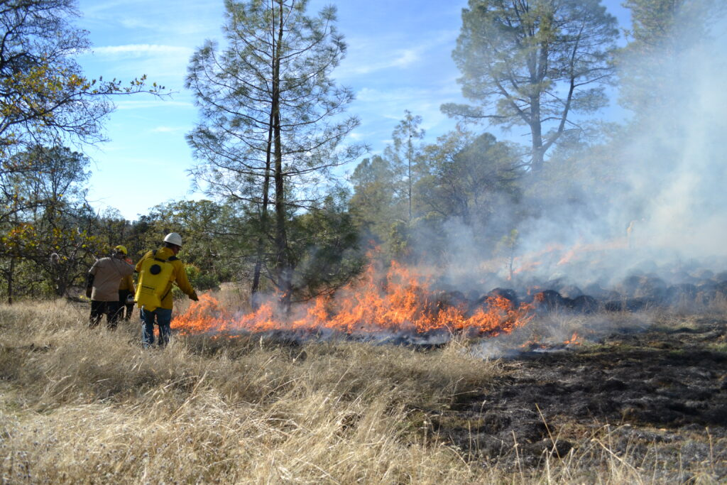 Prescribed fire at Murphy Meadow in 2015 | Photo by Julie Fair