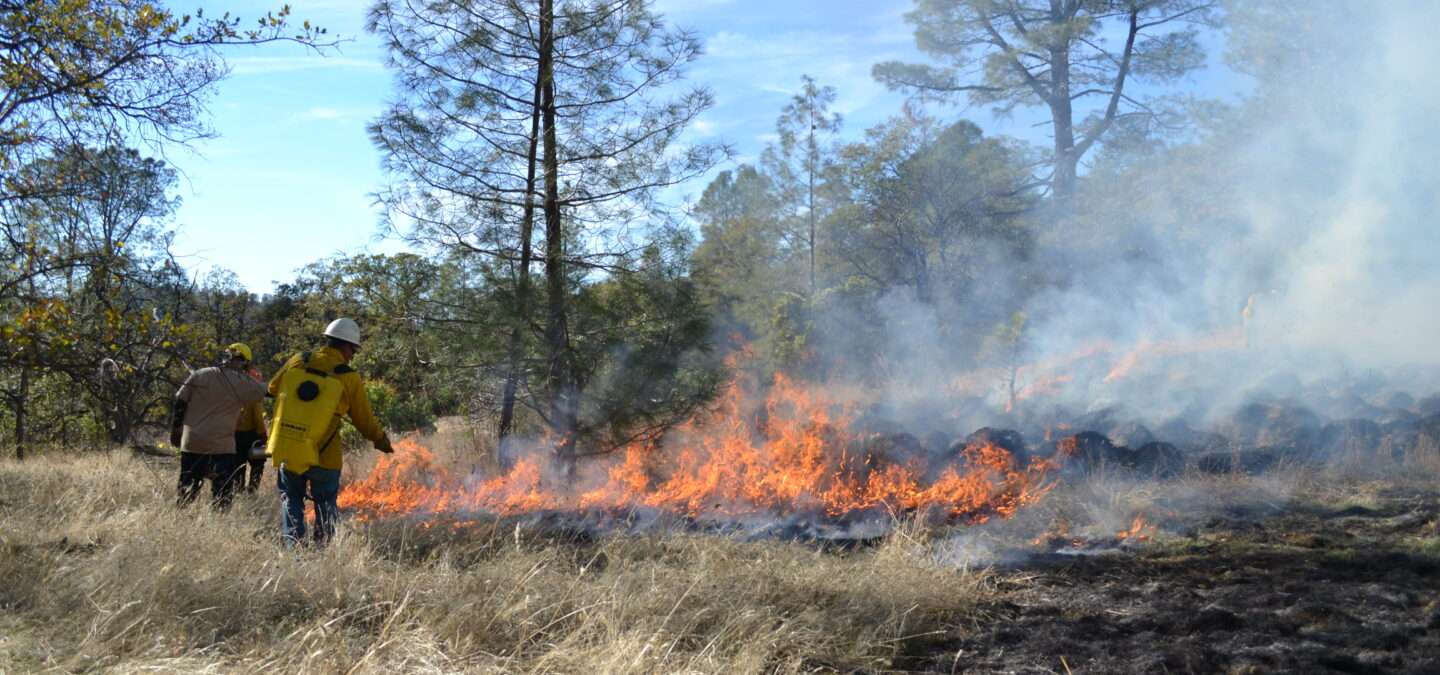 Prescribed fire at Murphy Meadow in 2015   Photo by Julie Fair