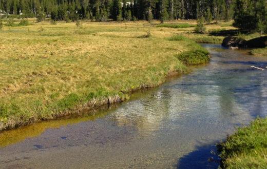 Ekhorn Peak Meadow   Walker Jacob Dyste